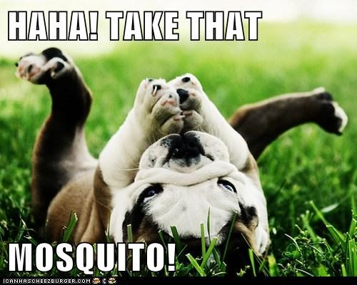 HAHA! TAKE THAT   MOSQUITO!