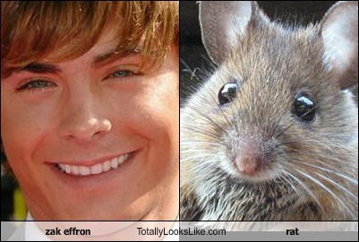 zak effron Totally Looks Like rat
