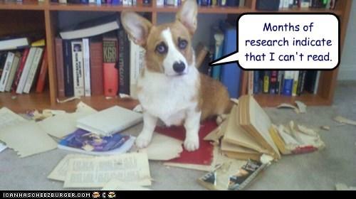 books,corgi,dogs,illiterate,read,research lab