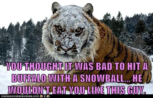 YOU THOUGHT IT WAS BAD TO HIT A BUFFALO WITH A SNOWBALL... HE WOULDN'T EAT YOU LIKE THIS GUY.