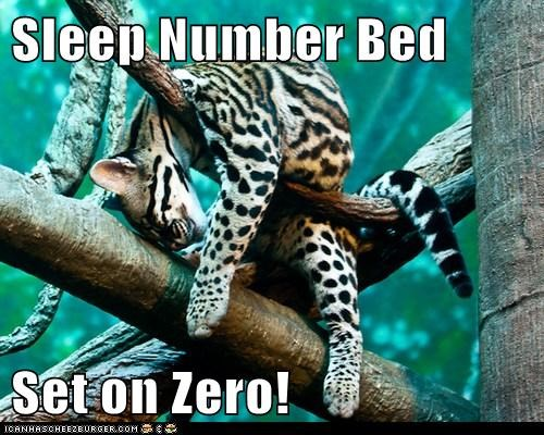 Sleep Number Bed  Set on Zero!