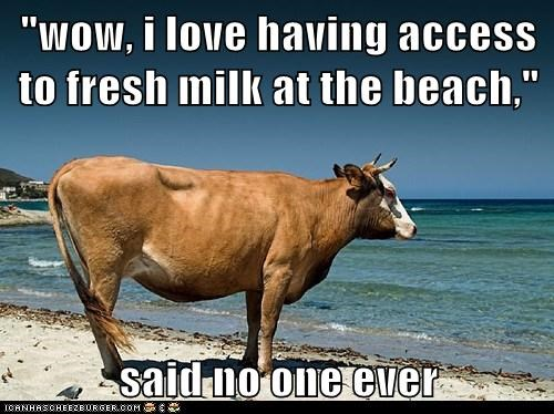 """wow, i love having access to fresh milk at the beach,""  said no one ever"