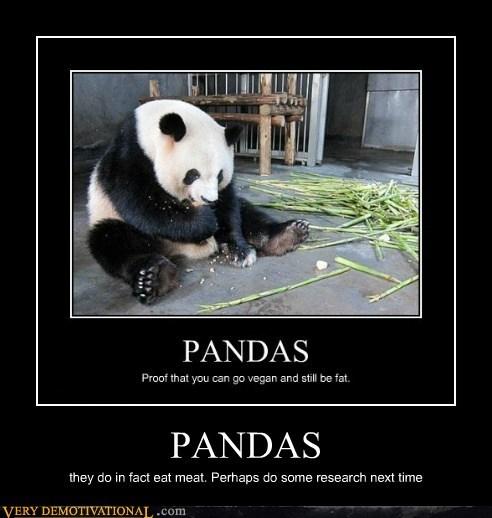idiots,omnivore,panda,research