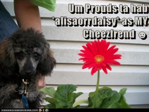 Um Prouds ta hab *alisaorrdaisy* as MY Cheezfrend ☻
