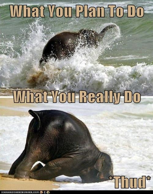 beach,elephant,embarrassment,faceplant,plan,thud,water