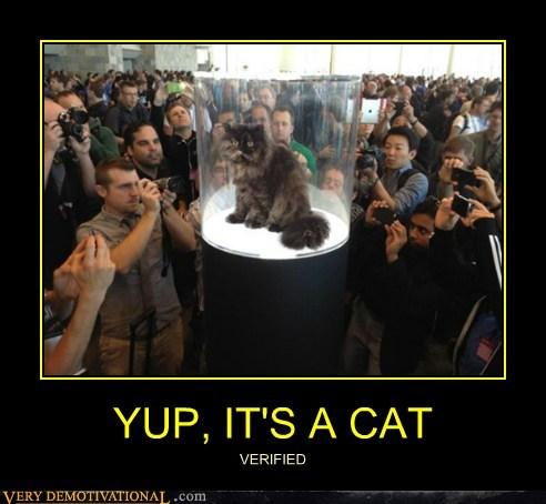 YUP, IT'S A CAT