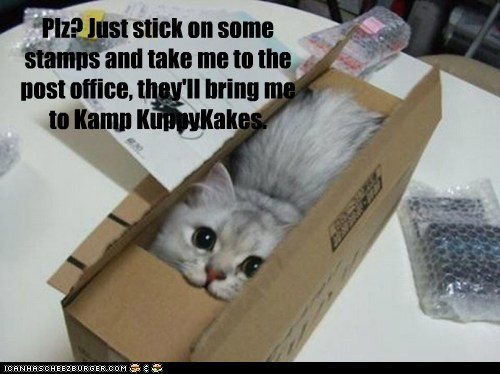 Plz? Just stick on some stamps and take me to the post office, they'll bring me to Kamp KuppyKakes.