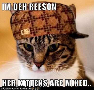 IM DEH REESON  HER KITTENS ARE MIXED..