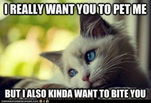 biting,Cats,complaining,first world cat problems,kitten,Memes,petting,whining