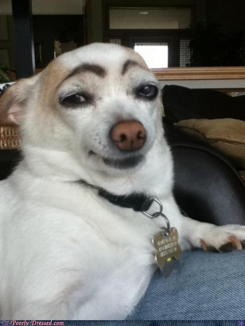 dogs,eyebrowse,makeup,pets