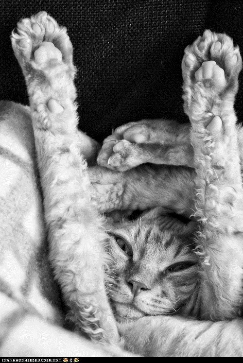 assembly,bendy,Cats,comfort is relative,cyoot kitteh of teh day,flexible,kitten,paws up,wtf,yoga