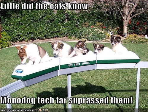 Little did the cats know  Monodog tech far suprassed them!