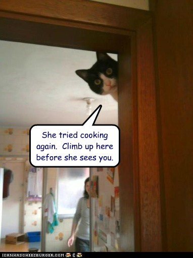 She tried cooking again.  Climb up here before she sees you.