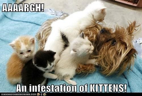 AAAARGH!  An infestation of KITTENS!