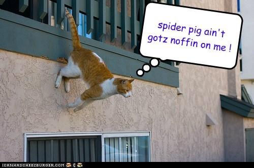 spider pig ain't gotz noffin on me !