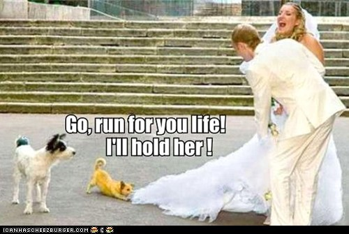 dogs,dresses,marriage,romance,run,run for your life,weddings