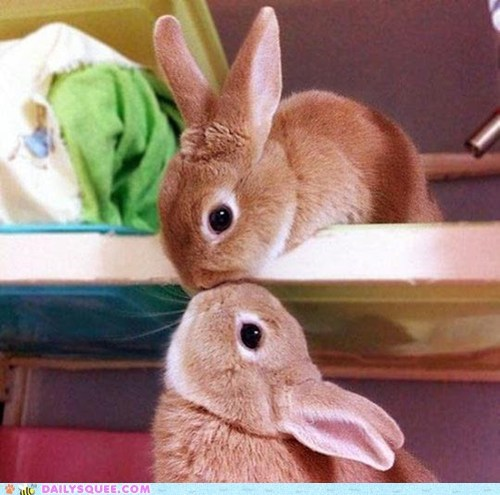 bunnies,bunny,Hall of Fame,hanging,happy bunday,kisses,kissing,squee,stretch