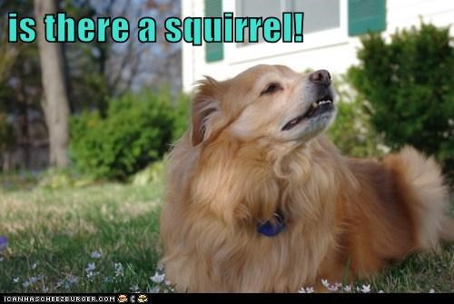 is there a squirrel!
