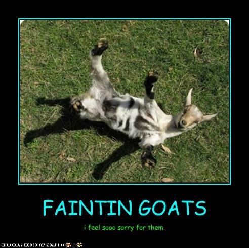 FAINTIN GOATS