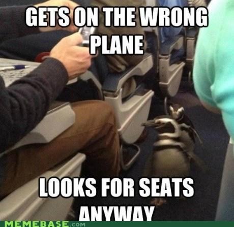 penguin,plane,socially awkward,socially awkward penguin