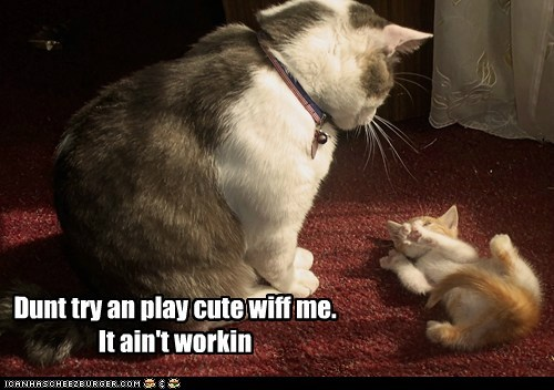 Dunt try an play cute wiff me.  It ain't workin