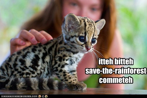 best of the week,big cats,captions,cheetah,cub,cubs,Hall of Fame,itteh bitteh committeh,kitty,leopard,leopards,pet,rain forest,save the planet