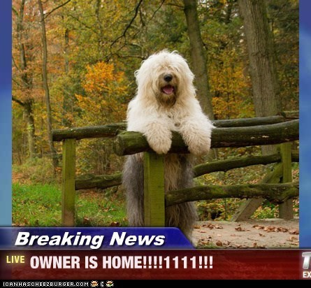 Breaking News - OWNER IS HOME!!!!1111!!!