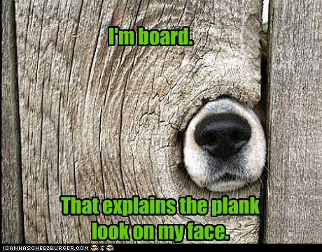 boards,bored,captions,dogs,fence,fences,pun,puns,stuck,what breed