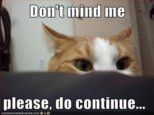 Lolcats: Don't mind me