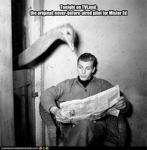 mr ed,newspaper,ostrich,TV