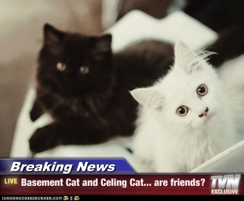 Breaking News - Basement Cat and Celing Cat... are friends?