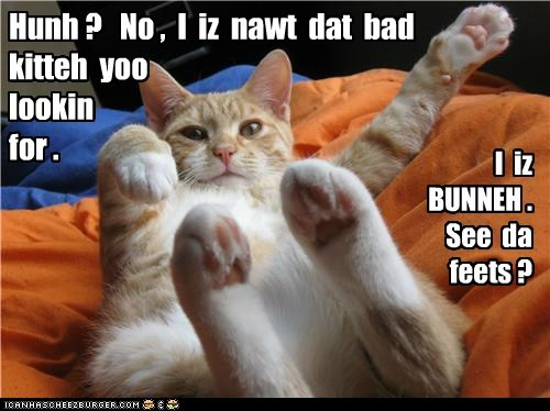 Lolcats: Don't look at da ears.