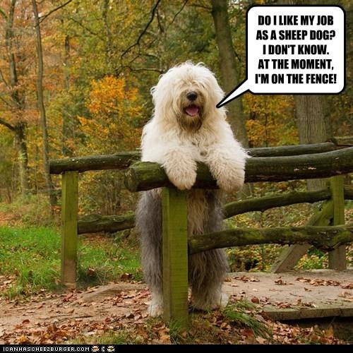dogs,fence,job,old english sheepdog,pun
