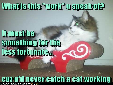 "What is this ""work"" u speak of? It must be                                                           something for the                                                   less fortunate... cuz u'd never catch a cat working"