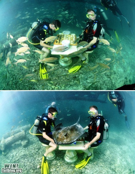 Underwater Chess WIN