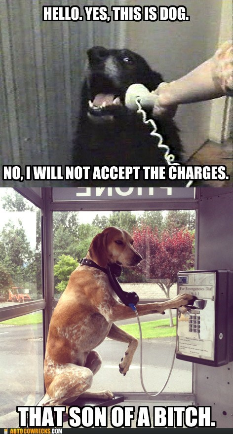 Collect Call From Dog