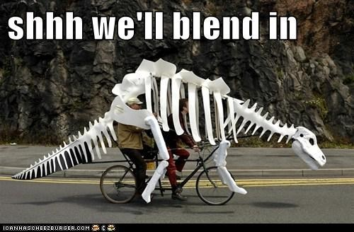 bikes,dinosaurs,political pictures