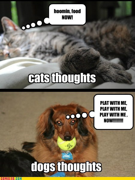 the diffrences between dog and cat thoughts