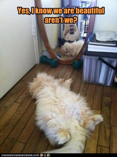 Lolcats: My reflection is my only beauty rival.