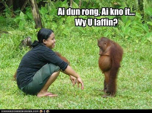 funny,guilty,laughing,orangutan,Sad,slouched,wrong
