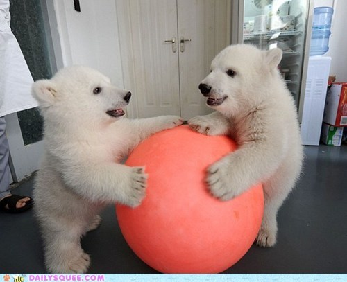 baby,ball,cubs,polar bear,sharing is caring,squee,twins