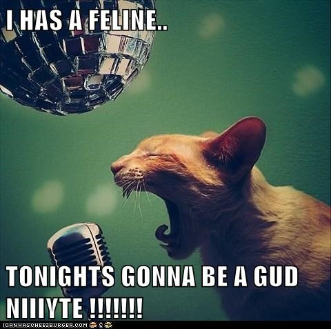 I HAS A FELINE..  TONIGHTS GONNA BE A GUD NIIIYTE !!!!!!!