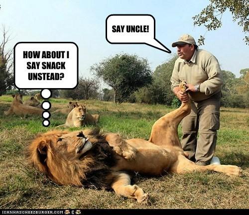 bad idea,eating,lion,snack,stupid,uncle,wrestling