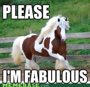 color,fabulous,horse,Memes,please