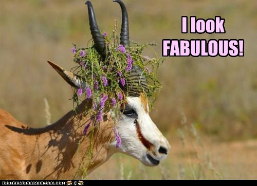 antelope,antelopes,beautiful,captions,fabulous,flowers,gazelles,hat,looking good