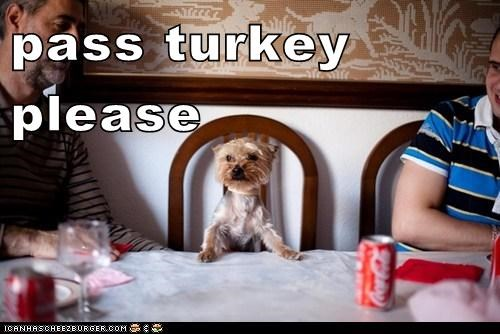 pass turkey please