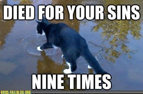 animals,cat,jesus,manimals,nine lives,sins