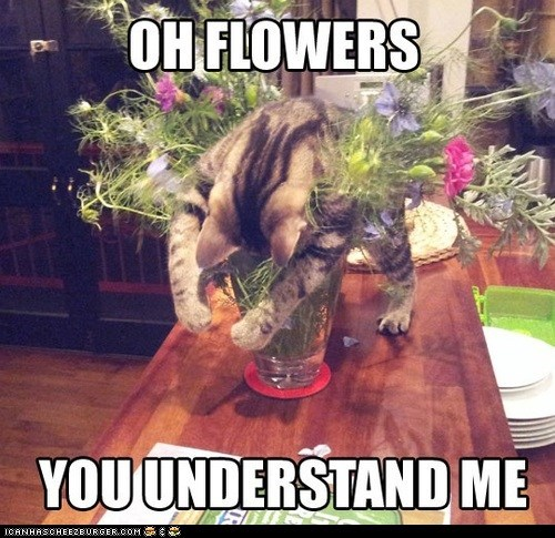 Cats,flowers,hugging,lolcats,understand,you understand me