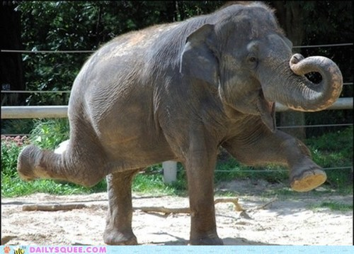 ballerina,dancing,elephant,trunk