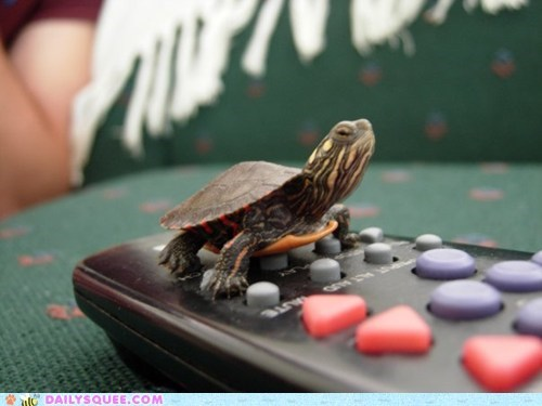 amphibian,baby,buttons,remote control,shell,squee,tiny,turtle